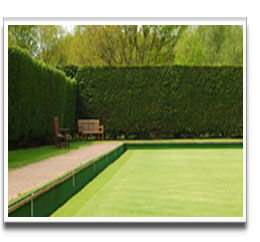 image of Snooker Table Grass Seed used for a bowling green