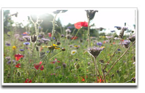image for Wildflower Grass Seed mix